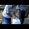 Συνέντευξη ελαιοπαραγωγών για τη διαδικασία της συλλογής του καρπού.