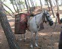Το άλογο του αγωγιάτη κ. Κοτζαμάνη που μεταφέρει απορίμματα από δύσβατες περιοχές του δήμου Μήθυμνας Λέσβου.